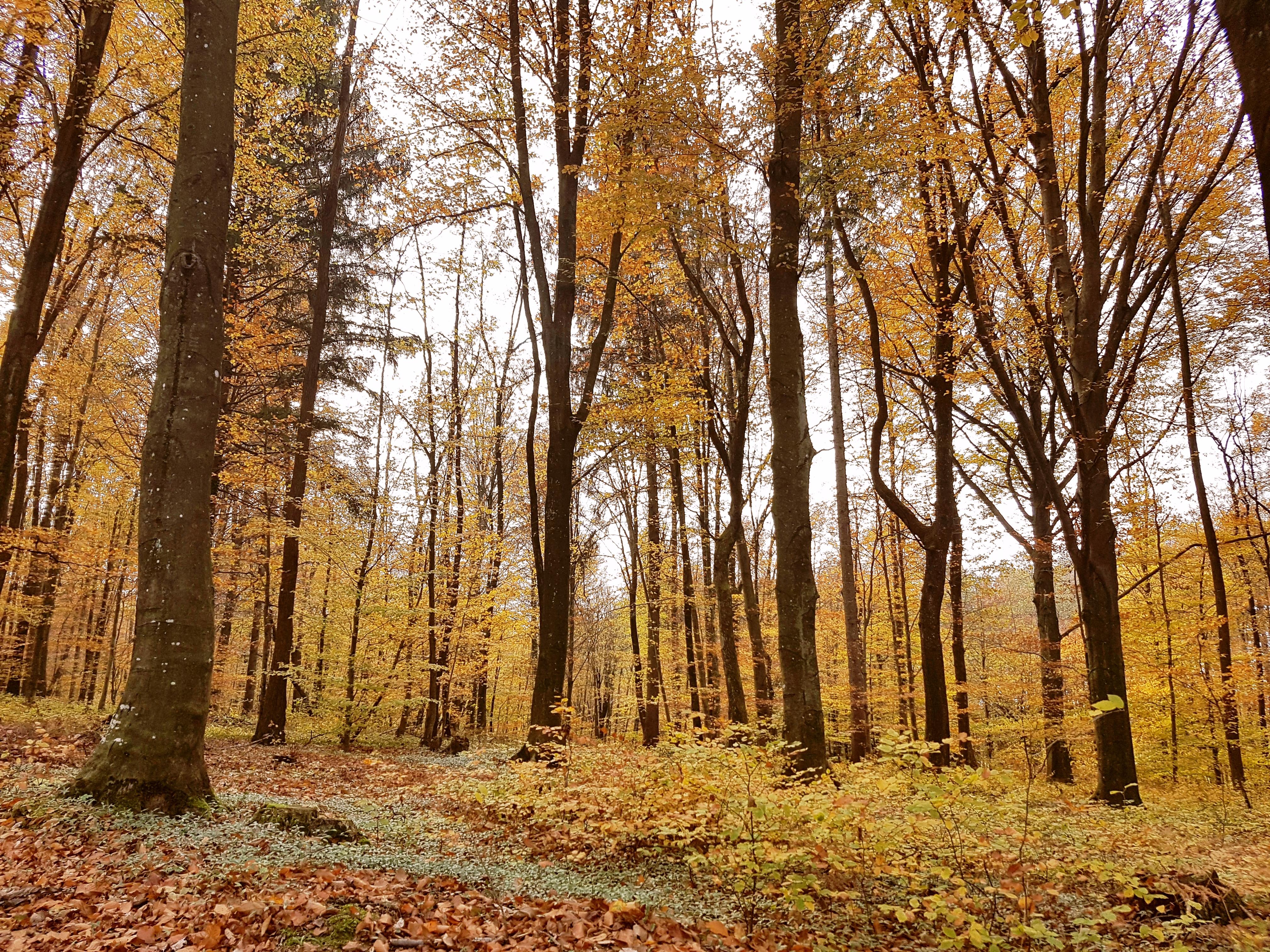 gozdna kopel 1